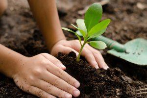 un-albero-in-più-toscana-ambiente