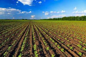 agricoltura-biologica-italia-primato-europeo