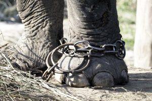 circo-animali-poggibonsi-toscana-ambiente