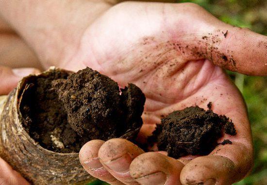 corno-letame-biodinamico-firenze-toscana-ambiente