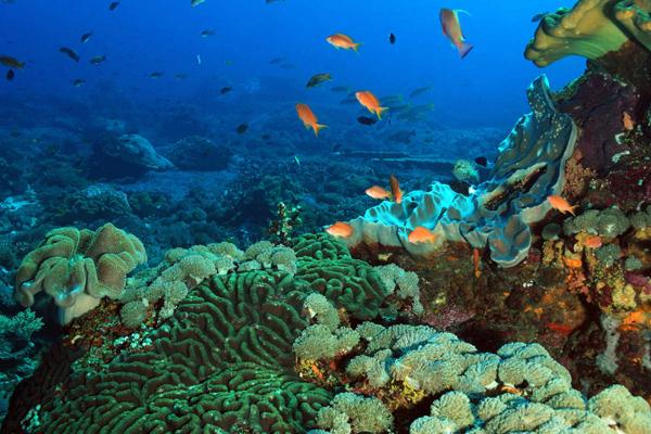 fondale-marino-toscana-ambiente