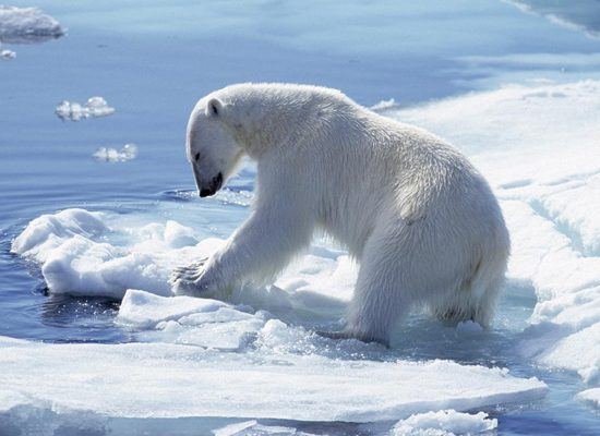 orso_polare_-clima-toscana-ambiente