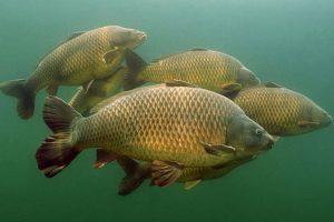 pesce-massaciuccoli-toscana-ambiente