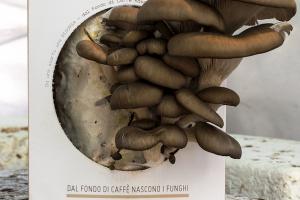 Kit funghi espresso