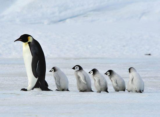 antartide-siena-pinguini-toscana-ambiente