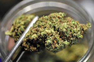 cannabis-terapeutica-toscana-ambiente