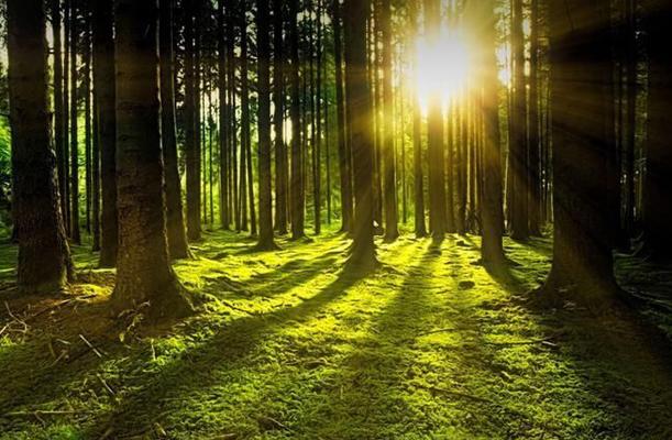 foreste-genetica-toscana-ambiente