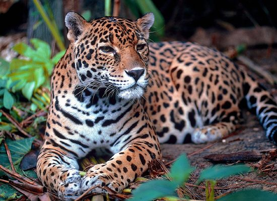 giaguraro-foreste-pluviali-toscana-ambiente