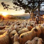 pastori_buona