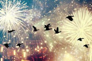 Uccelli botti di Capodanno