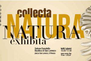 natura-collecta-exhibita-firenze-toscana-ambiente