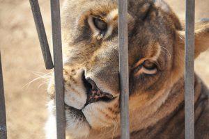 circo-animali-toscana-ambiente