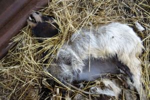 Foto dalla pagina Fb del Centro didattico WWF dei Ronchi
