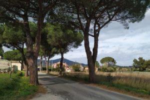 I pini di San Giovanni (foto Legambiente)
