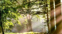 luce-piante-toscana-ambiente-pisa