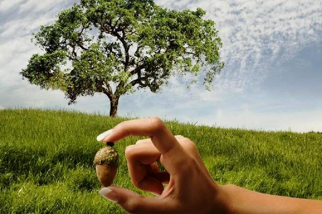 seme di albero
