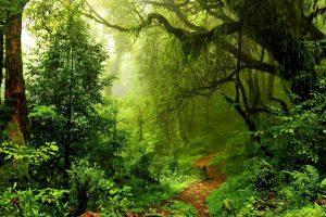 Foresta-amazzonica-pluviale-firenze-toscana-ambiente