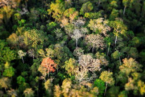 Foto di Greg Armfield - WWF UK