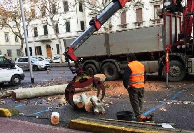 Alberi abbattuti in viale Matteotti (foto Italia Nostra Firenze)