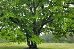 alberi-figline-incisa-valdarno-toscana-ambiente
