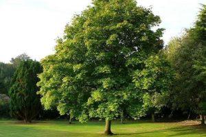 alberi-scandicci-toscana-ambiente