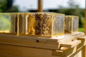 arnia-calenzano-api-toscana-ambiente
