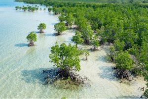 mangrovie-università-firenze-toscana-ambiente