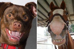 Cani-cavalli-sorriso-toscana-ambiente