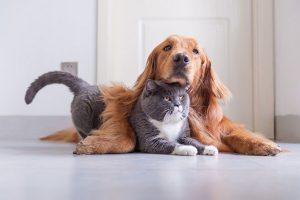 cani-gatti-toscana-ambiente