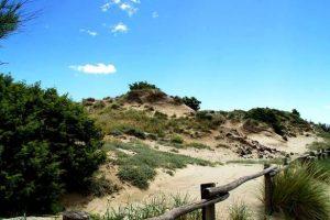 Le dune di Tirrenia (foto Wwf Toscana)