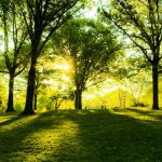 verde-urbano-san-rossore-toscana-ambiente