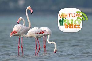 virtual-bioblitz-Grosseto-Toscana-ambiente