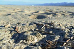 Uno dei due nidi (foto dalla pagina Facebook del Parco di San Rossore)
