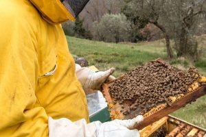 apicoltura-bagno-a-ripoli-firenze-api-toscana-ambiente