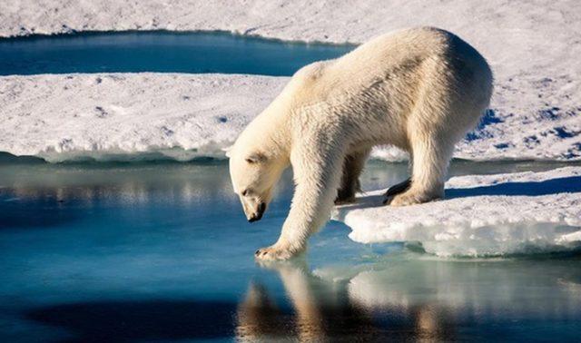 orso-antatide-siena-toscana-ambiente