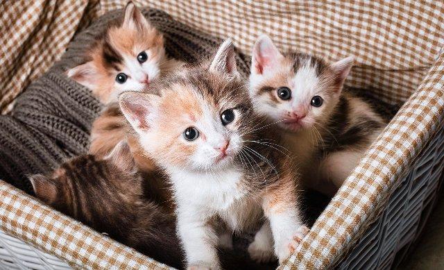 gattini abbandonati Toscana-ambiente