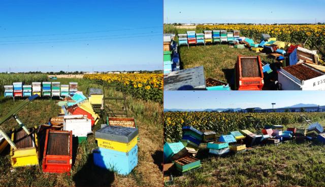 Foto Arpat (Associazione regionale produttori apistici toscani)