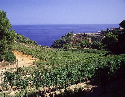 Gorgona, vigneto Toscana-ambiente