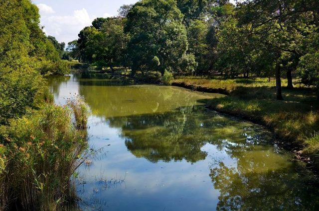 Parco di San Rossore (foto di Mario Ciampi da www.parcosanrossore.org)