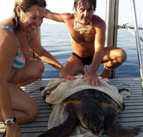 Arpat_Salvataggio tartaruga