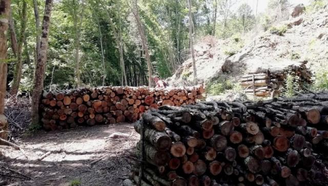Taglio-alberi_Toscana-ambiente