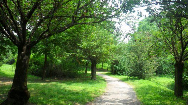 alberi-verde-urbano-toscana-ambiente