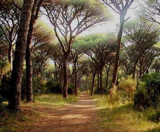 Pinete maremmane Toscana-ambiente
