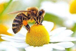 profumi-insetti-impollinatori-pisa-toscana-ambiente