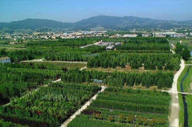 vivaio-Pistoia_Toscana-ambiente