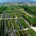 Vivai Pistoia Toscana-ambiente