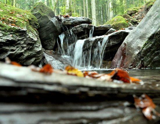 Foto Parco nazionale delle foreste casentinesi