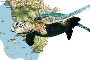 tartarughe-toscana-ambiente-nidi
