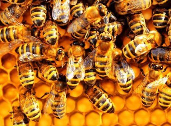 Carmignano-giornata-conoscere-api