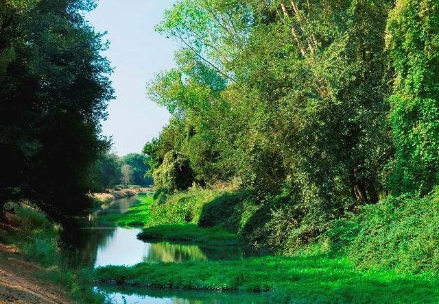 Foto di Mario Ciampi da www.parcosanrossore.org